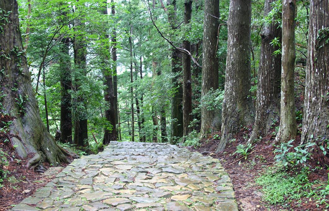 森・樹への想い